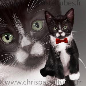 Student Cat